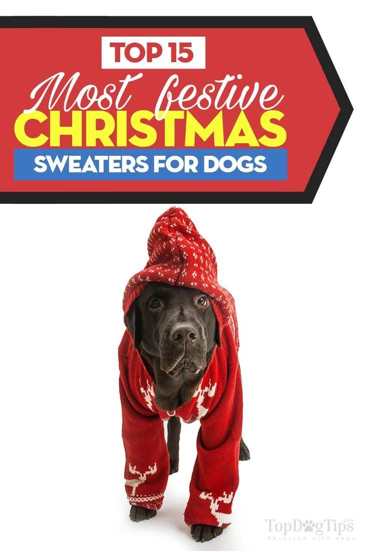 15 Cutest Christmas Sweaters for Dogs