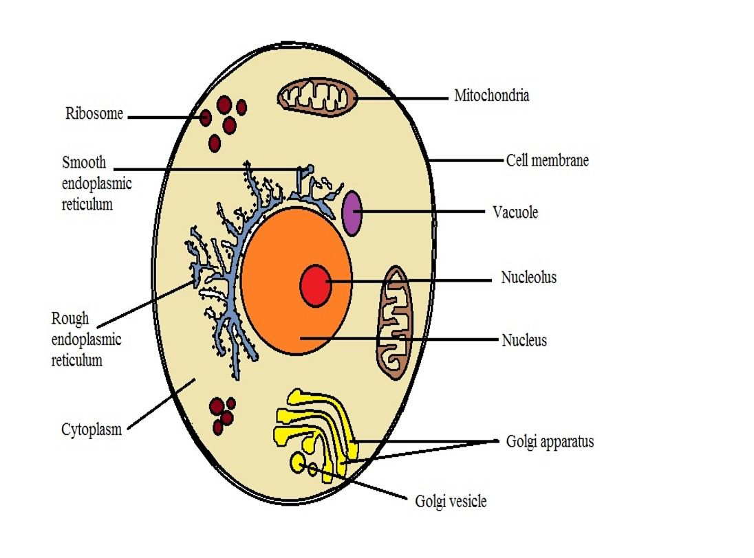 What are the differences between a plant cell and an ...