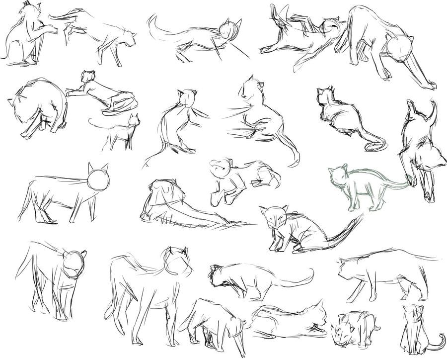 Gallery For Gt Cat Poses Drawing With Images Cat Drawing