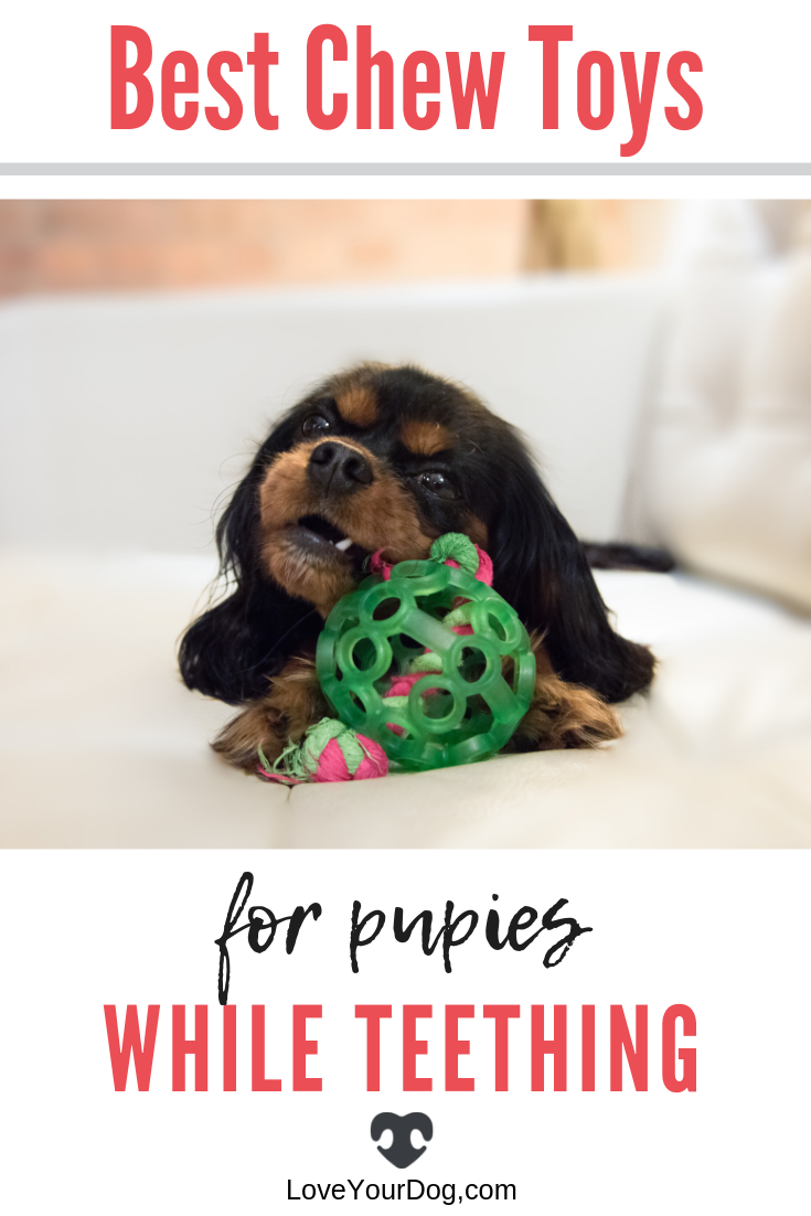 Best Chew Toys For Puppies While Teething 2020 Reviews Best Dog Toys Puppy Teething Puppy Toys Teething