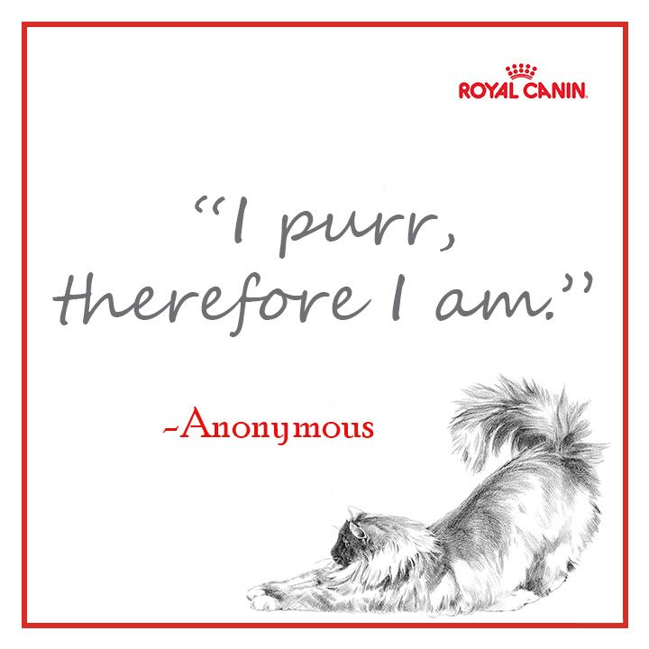 Pinterest Animal Quotes: Animal Quotes, Pets