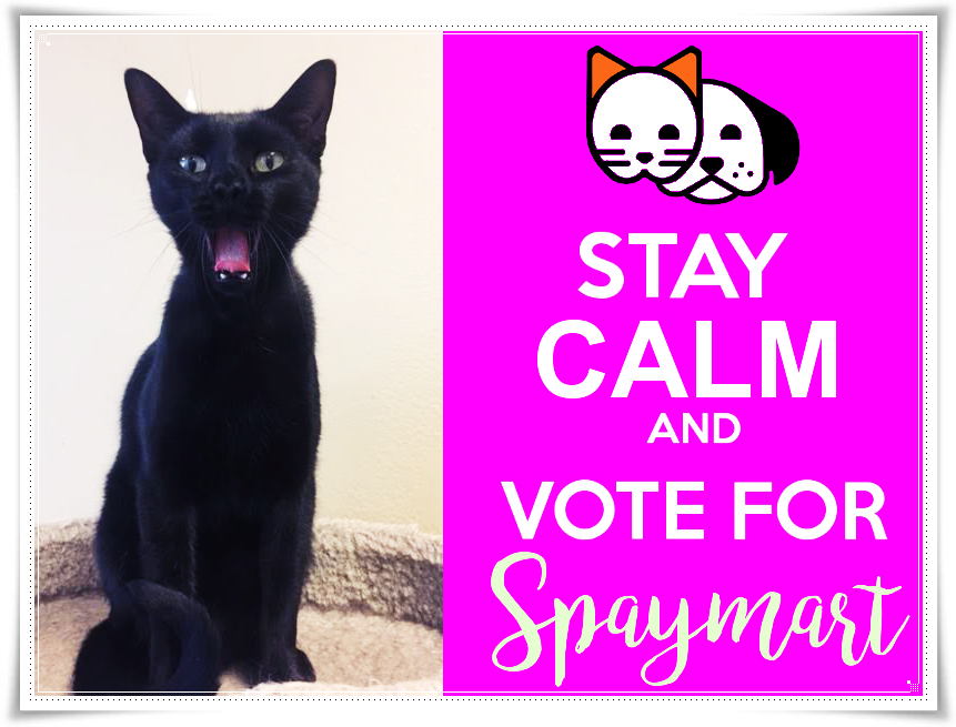 Help Local Cat Rescue Spaymart Win 10k Just Need A Vote Closets Of Free Samples Cat Rescue Crazy Cats Cats