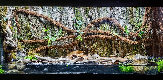 shallow paludarium beautiful but could use some moss especially to hide that the vines are not. Black Bedroom Furniture Sets. Home Design Ideas