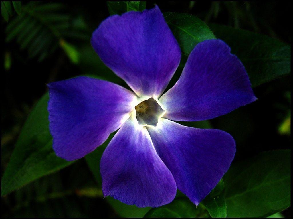 bilder på skrivebordet - Fantastisk blomster: http://wallpapic-no.com/tegneserier-og-fantasy/fantastisk-blomster/wallpaper-10475