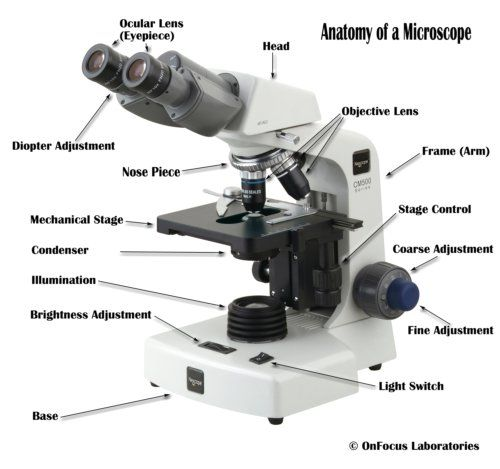 Parts Of A Compound Microscope With Diagram And Functions