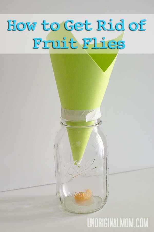 How To Get Rid Of Fruit Flies With Images Cute