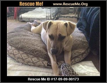Urgent About 1yr Old House Broken Great W Dogs And Kids She S At A Kill Shelter Apollo S Angels Paterson Nj Rescue A Dogs And Kids Animal Rescue Dogs