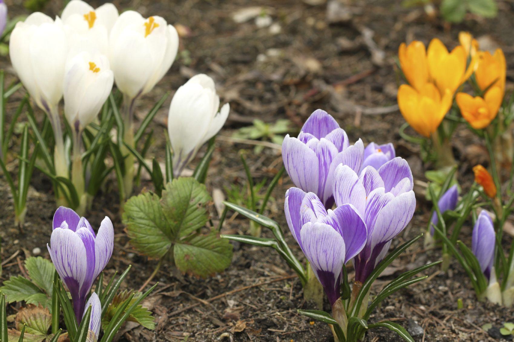 Beautiful Gardening Know How Ensign - Brown Nature Garden ...