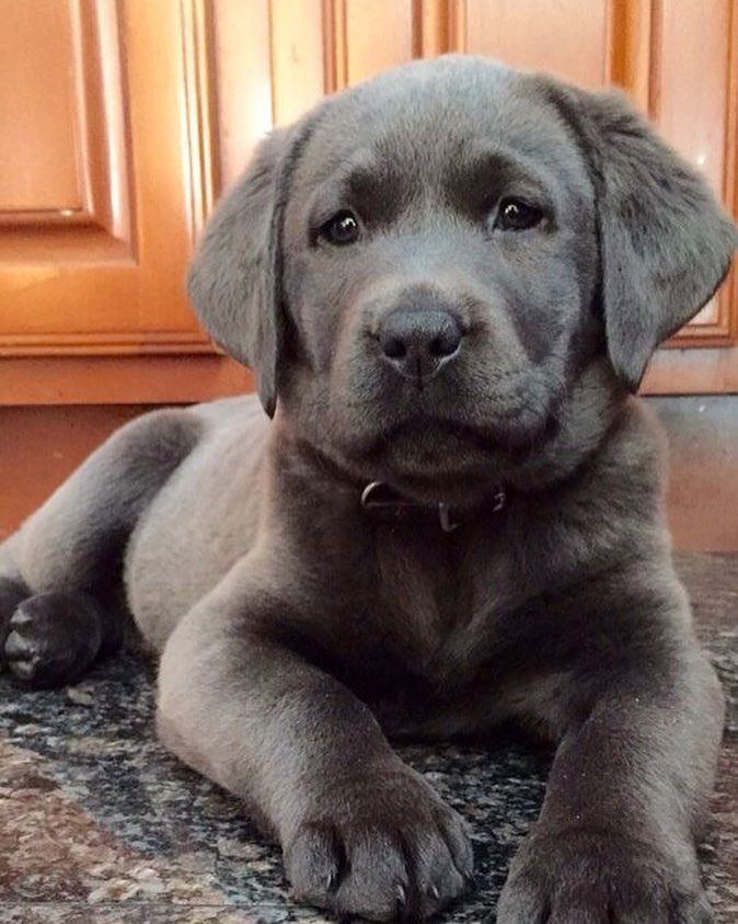 Concerned look on this pup  #dogs