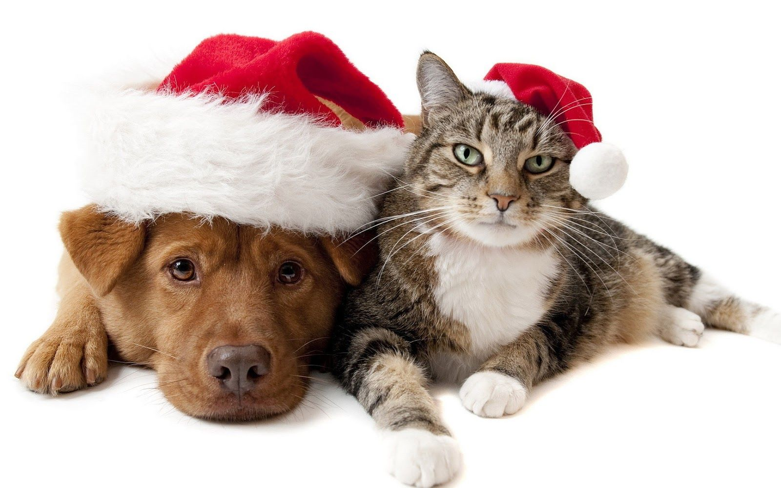 Feel Happy Cats And Dogs