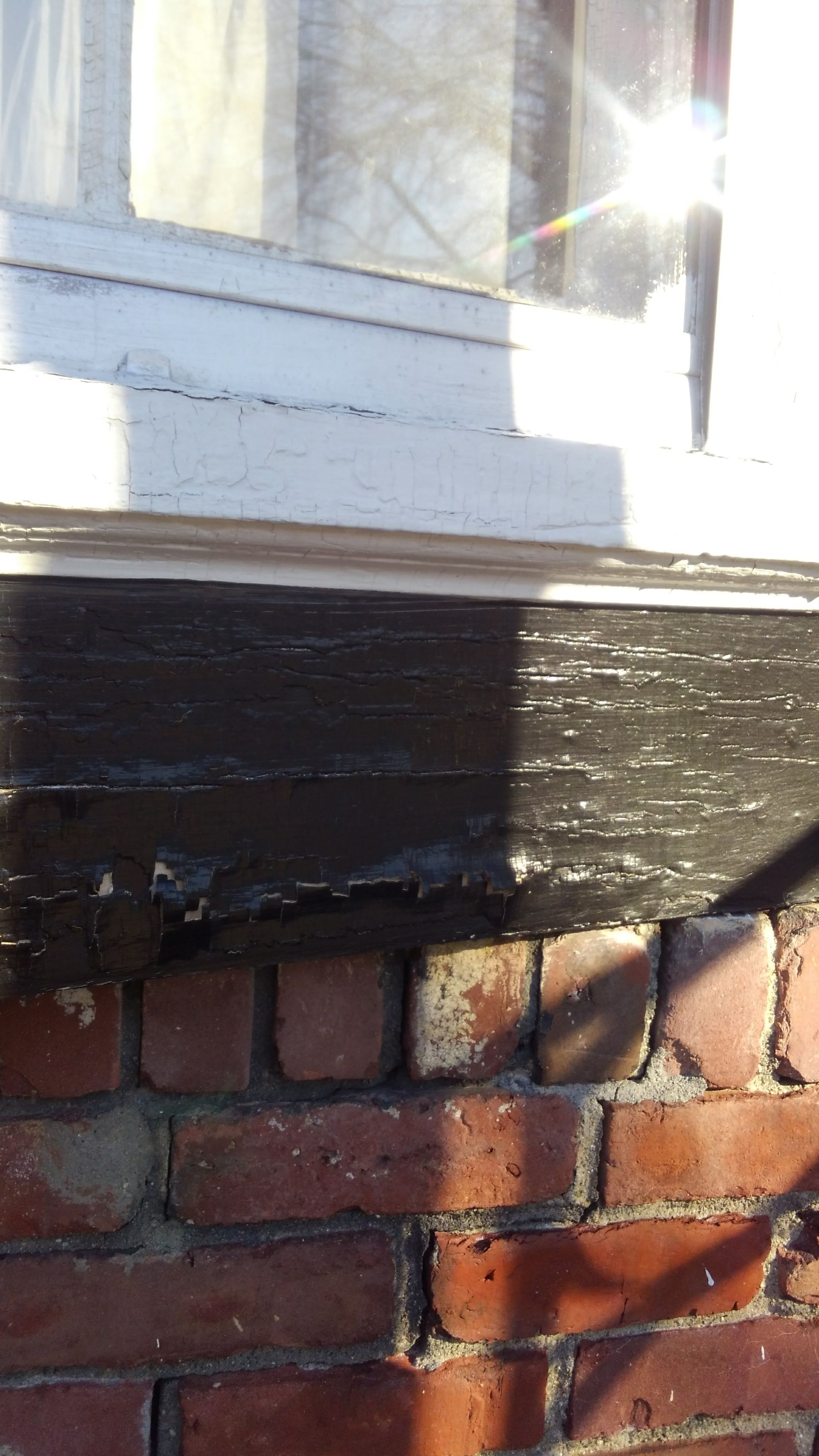 Carpenter Bee hole under bay window Bay window