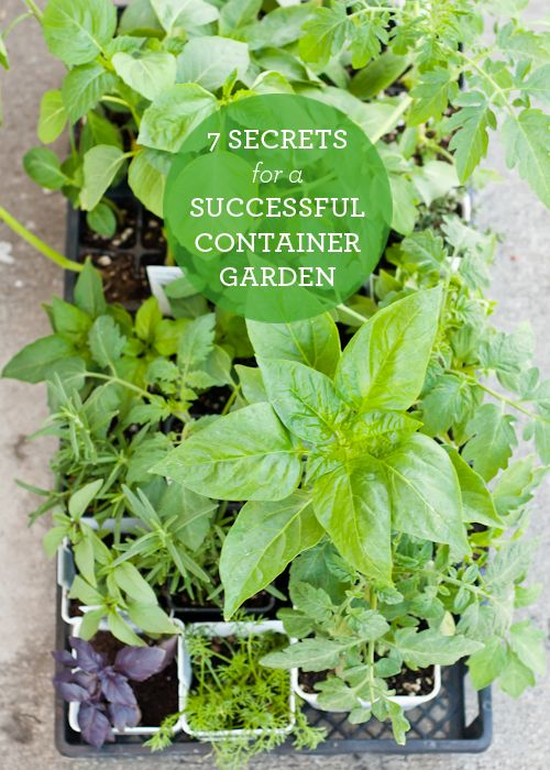 How to Plant a Successful Container Garden - 7 Secrets! Design Mom