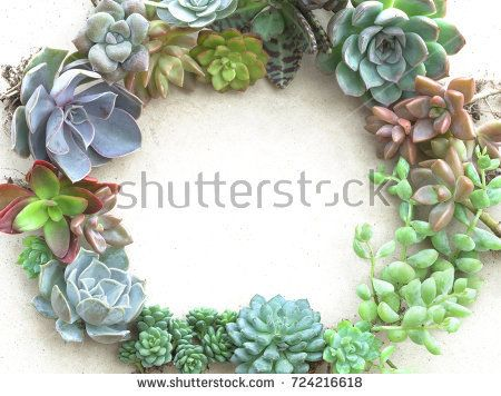 Colorful Flowering Succulent Plants Frame background | Succulent ...