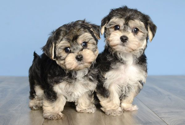 Better Puppies Better Prices Better Hurry Puppies Best Puppies Puppy Pictures
