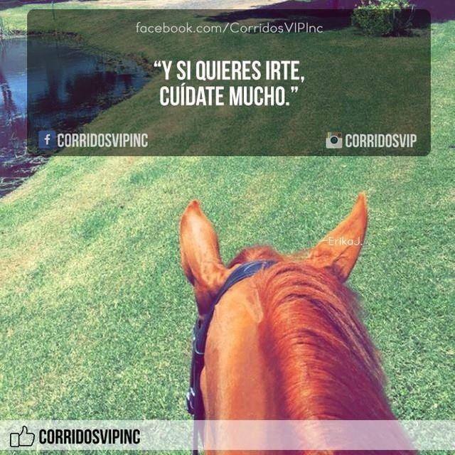 Pos que le vaya bien.!  ____________________ #teamcorridosvip #corridosvip #corridosybanda #corridos #quotes #regionalmexicano #frasesvip #promotion #promo #corridosgram - http://ift.tt/1HQJd81