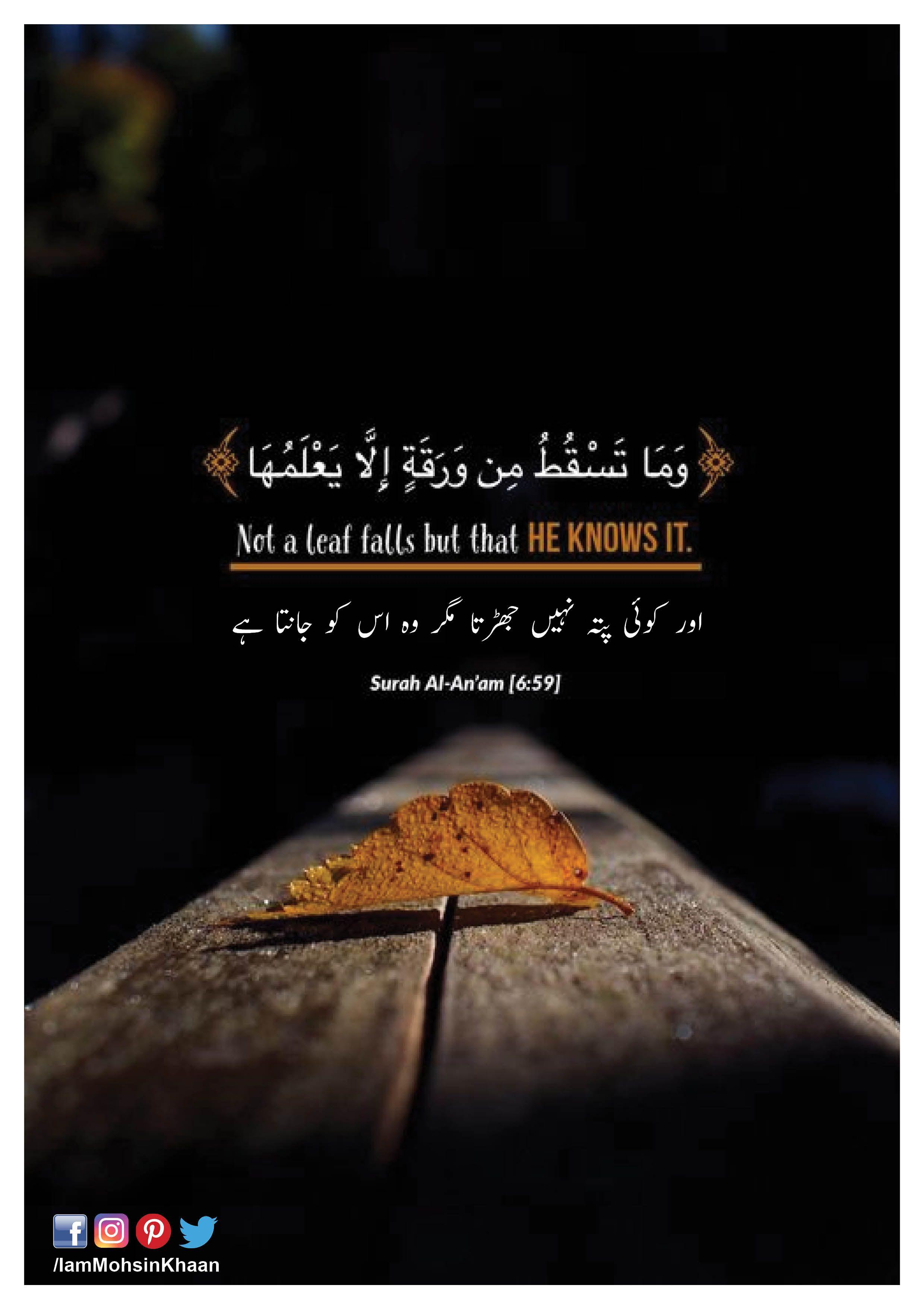 Surah Al An Am Ayat 6 : surah, Surah, Al-An'am, #Quran, Beautiful, Verses,, Quran, Quotes, Inspirational,