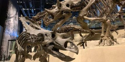 Natural history museum utah dinosaurs 47+ Ideas for 2019 #historyofdinosaurs Natural history museum utah dinosaurs 47+ Ideas for 2019 #history #historyofdinosaurs Natural history museum utah dinosaurs 47+ Ideas for 2019 #historyofdinosaurs Natural history museum utah dinosaurs 47+ Ideas for 2019 #history #historyofdinosaurs Natural history museum utah dinosaurs 47+ Ideas for 2019 #historyofdinosaurs Natural history museum utah dinosaurs 47+ Ideas for 2019 #history #historyofdinosaurs Natural his #historyofdinosaurs