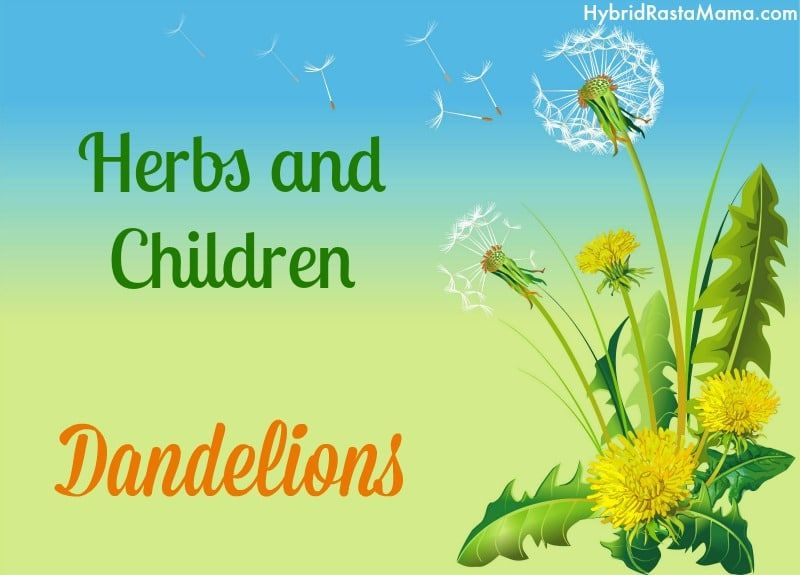 Fried Dandelions Candied Dandelions Recipe Herbs Dandelion Dandelion Recipes