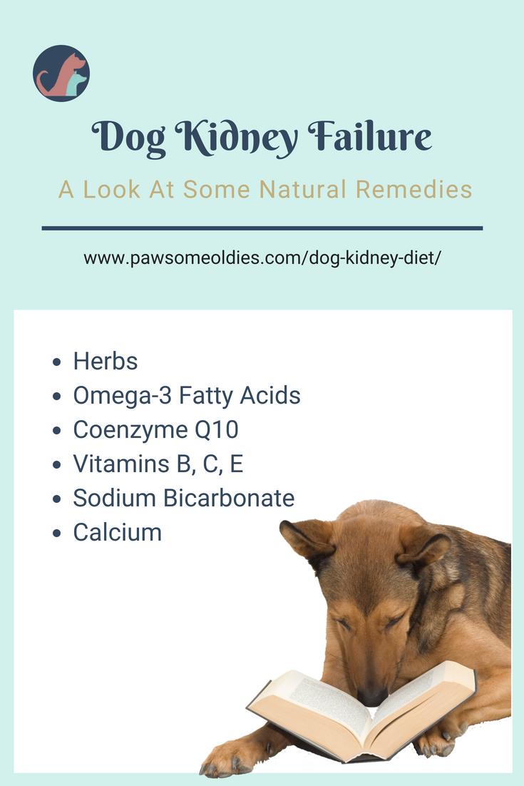Dog Kidney Diet Kidney diet for dogs, Kidney disease