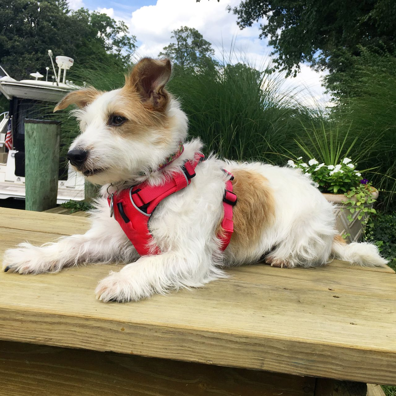 Front range dog harness with front and back attachment