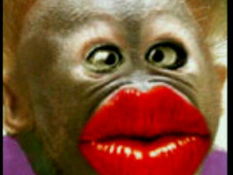 Sweet Funny Monkey Pictures Monkey Pictures Good Morning Kisses