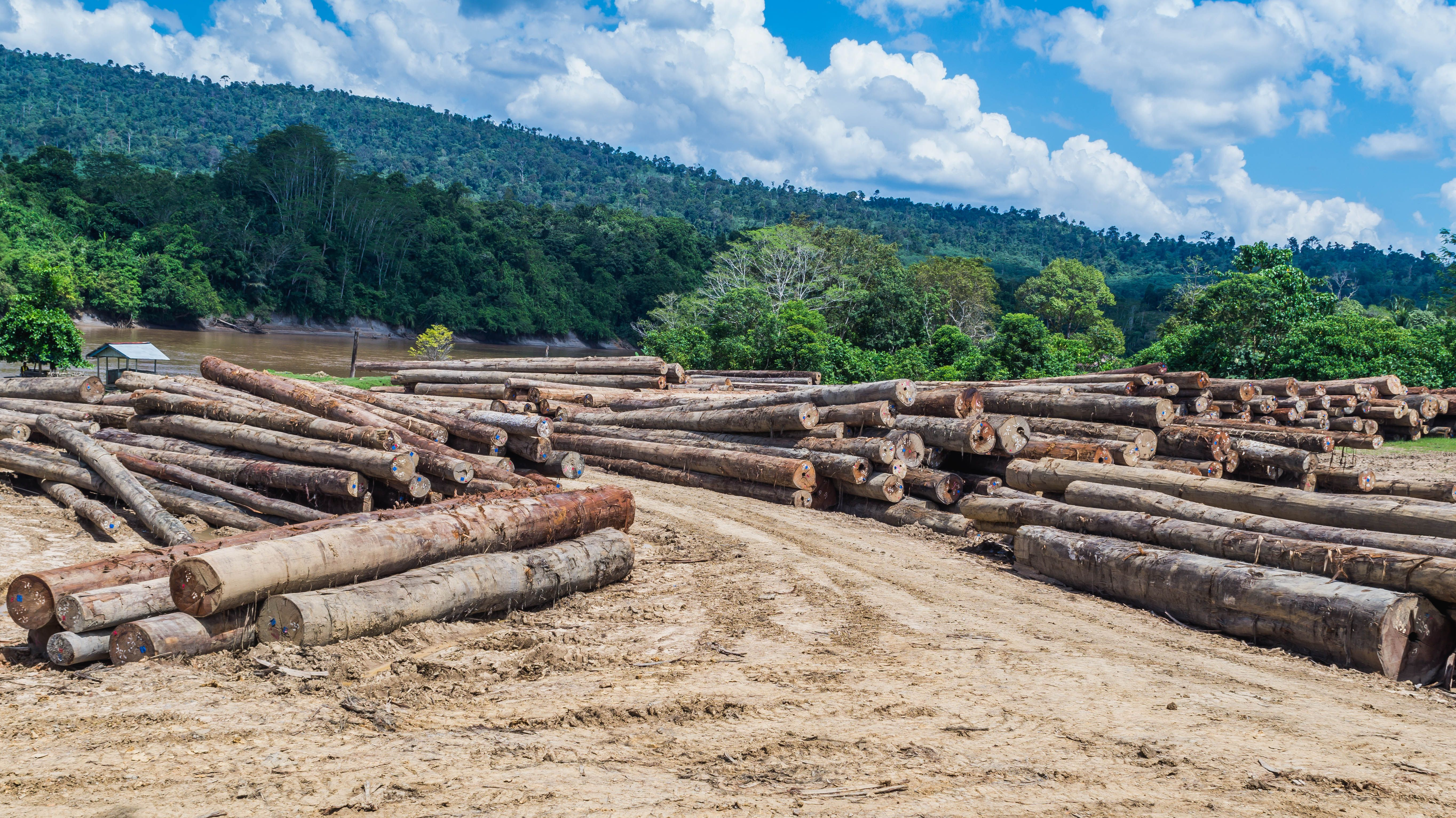log yard of rain forest tropical hardwood on Mahakam