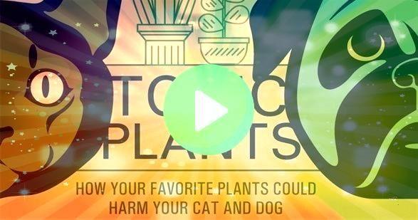 Zajechowski and Pots Planters  More compiled a toxic plants guide breakin Matt Zajechowski and Pots Planters  More compiled a toxic plants guide breakin  Colocasia escule...