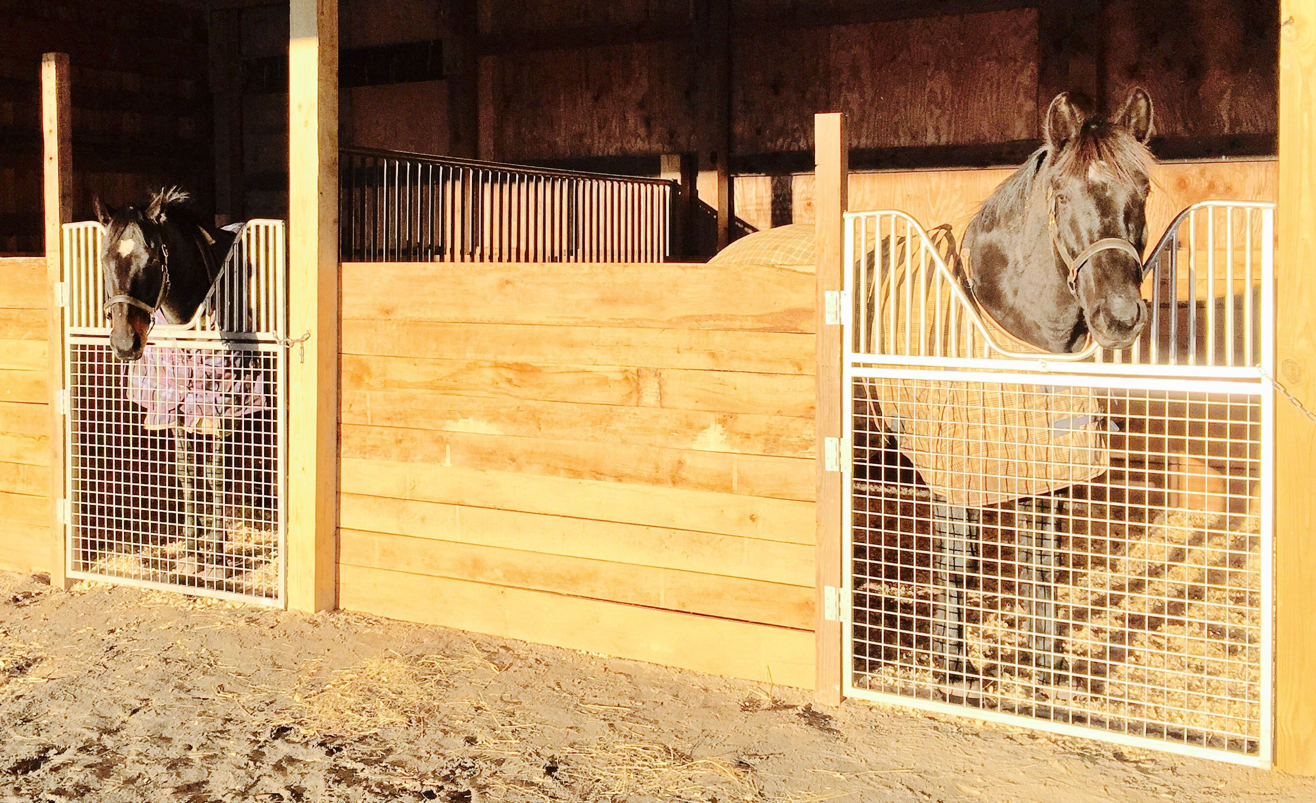 Example Of Our Stall Gates In Our Customer S Equine Barn Our Stall Gates Are Perfect For Existing Horse S Diy Horse Barn Horse Barn Ideas Stables Horse Stalls