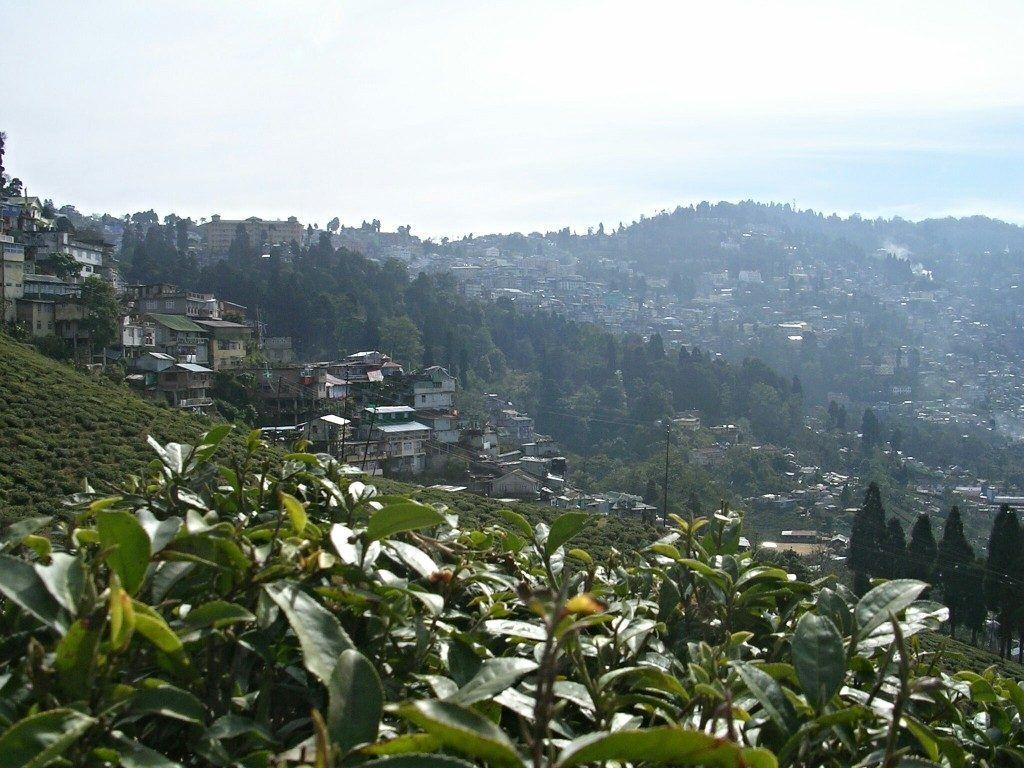 Von Tee in Darjeeling und Kolkata, der Stadt der größten Gegensätze