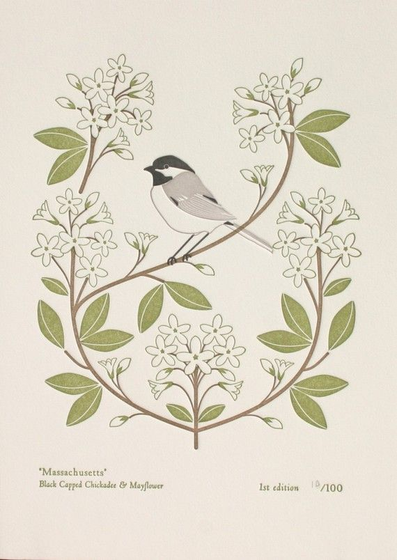 Massachusetts (from birds and blooms of the 50 states) - $15 ...