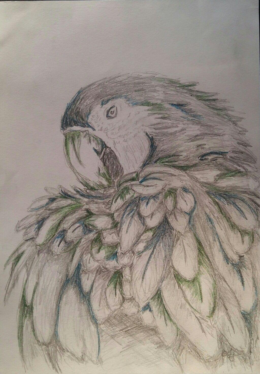 Papagei | Meine Zeichnungen | Pinterest | Papageien, Schleim und Übungen