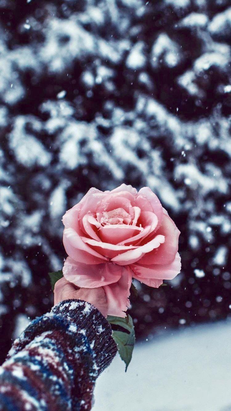 Pin by Alyssa Pellicone on B.W Wallpapers | Flower ...