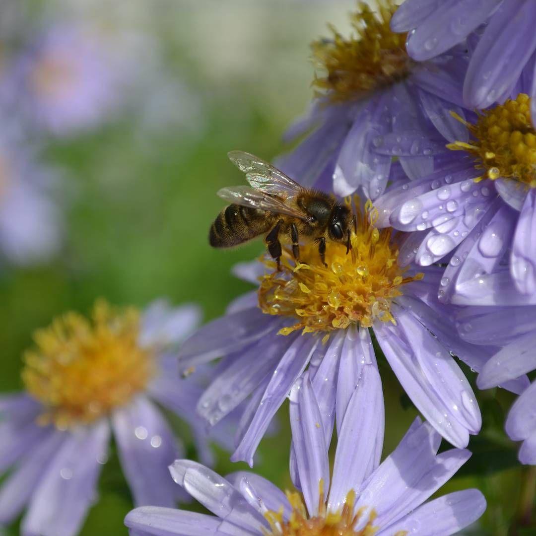 368 Mentions J Aime 57 Commentaires Des Pensees Au Jardin