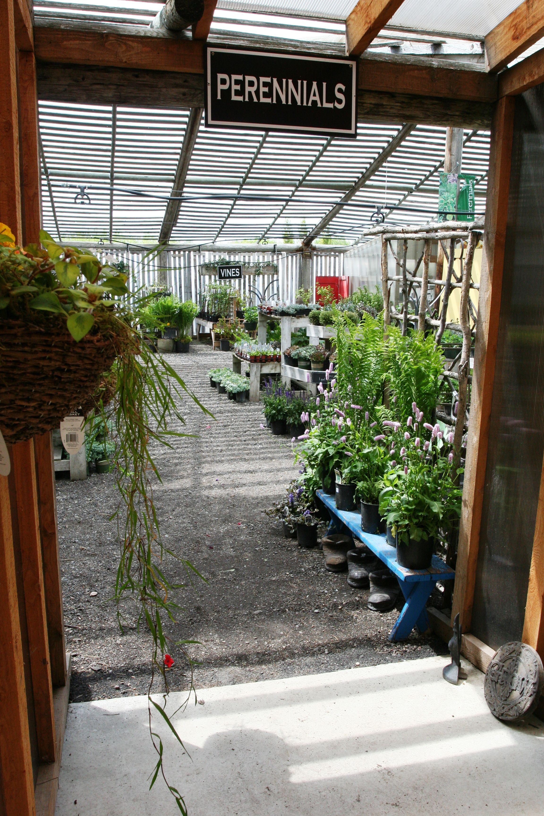 The Walkway To Our Perennials At Countryside Garden Centre 400 x 300