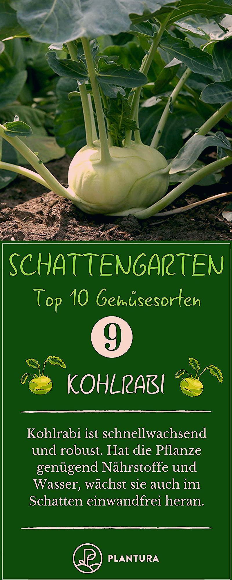 Photo of Gemüse für den Schatten: Unsere Top 10 Übersicht – Plantura