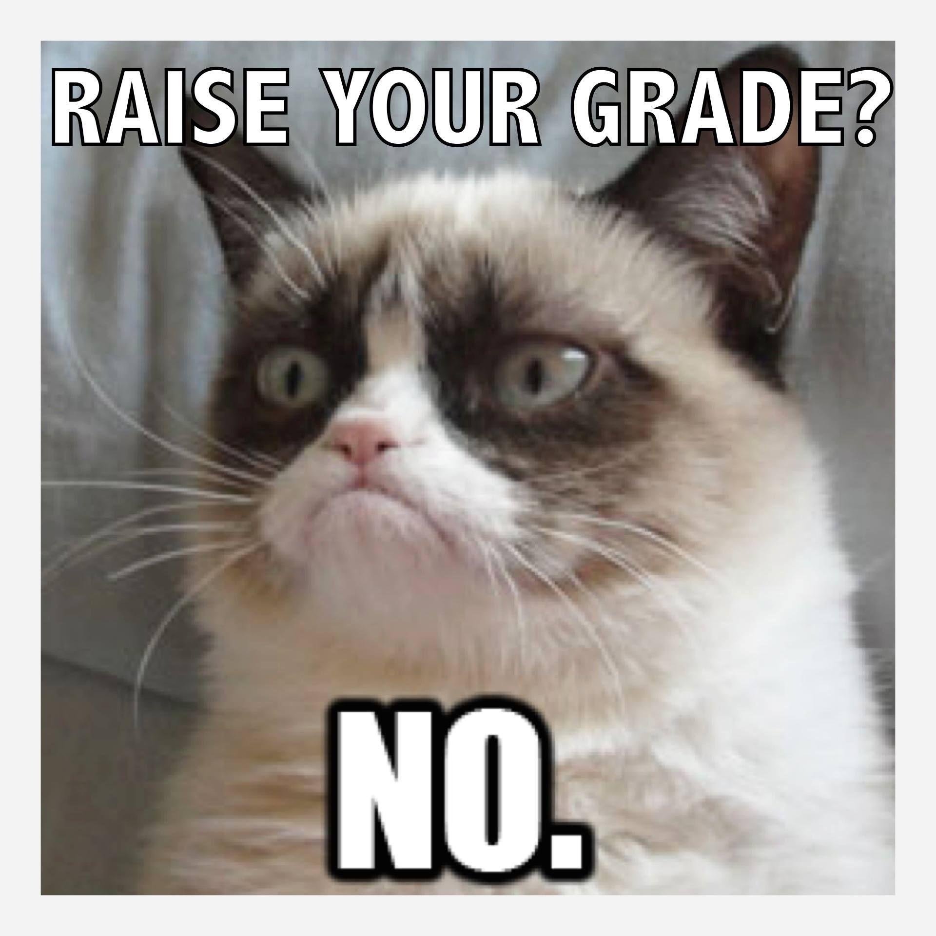 grumpy cat riase grade grading teaching lols cats grumpy cat riase grade
