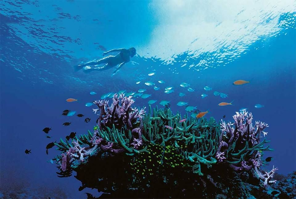 Free Diving On The Great Barrier Reef, Queensland
