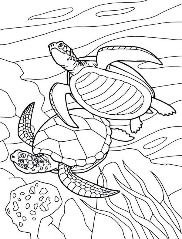 Free Picture Of Sea Turtle Mating Coloring Page Turtle Coloring Pages Animal Coloring Pages Ocean Coloring Pages