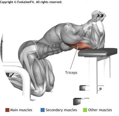 TRICEPS - KNEELING CABLE TRICEPS EXTENSION | träning