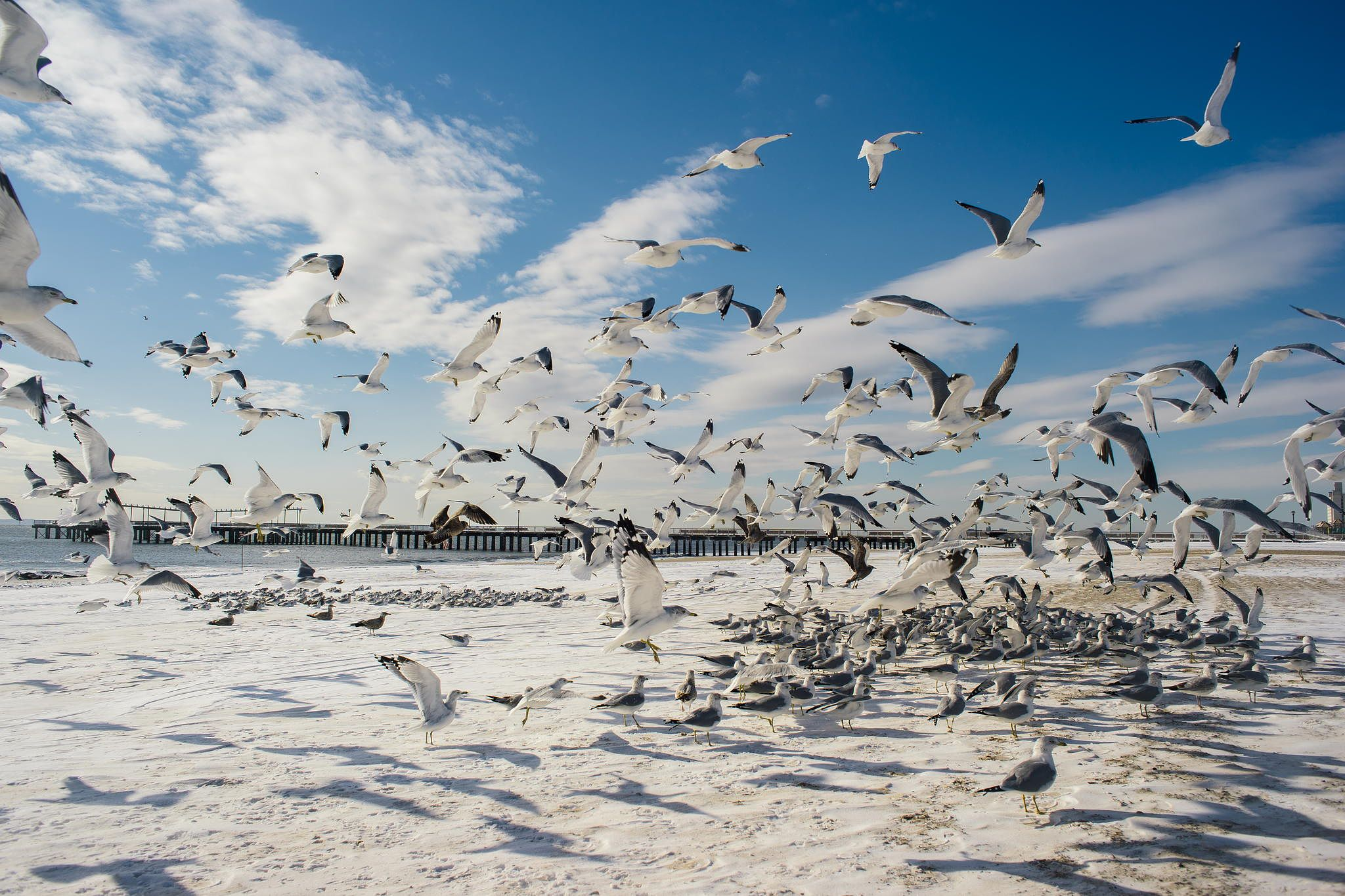 Photograph Coney Island Birds by Roman K on 500px