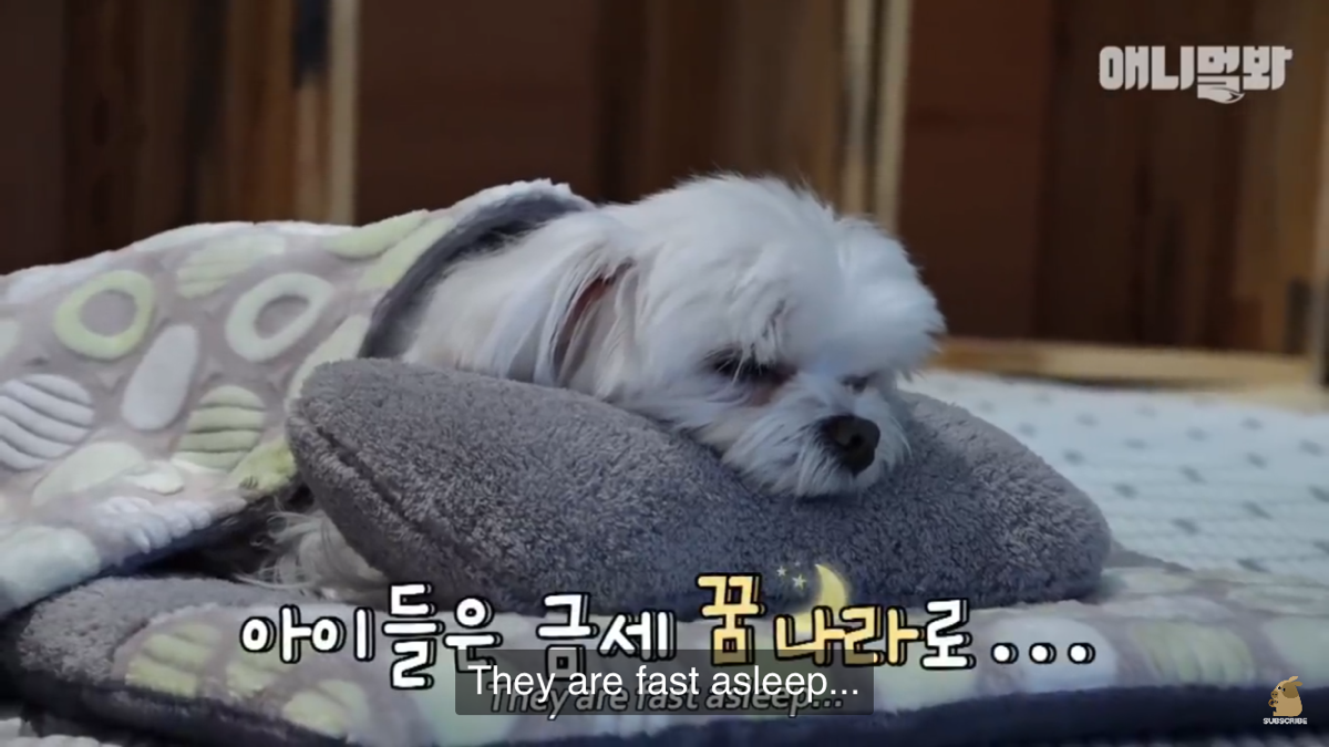 韓国で大人気 とってもかわいい犬の幼稚園 どんなことをするの Very Popular In Korea Cute Dog Kindergarten Dogs Animals Asleep