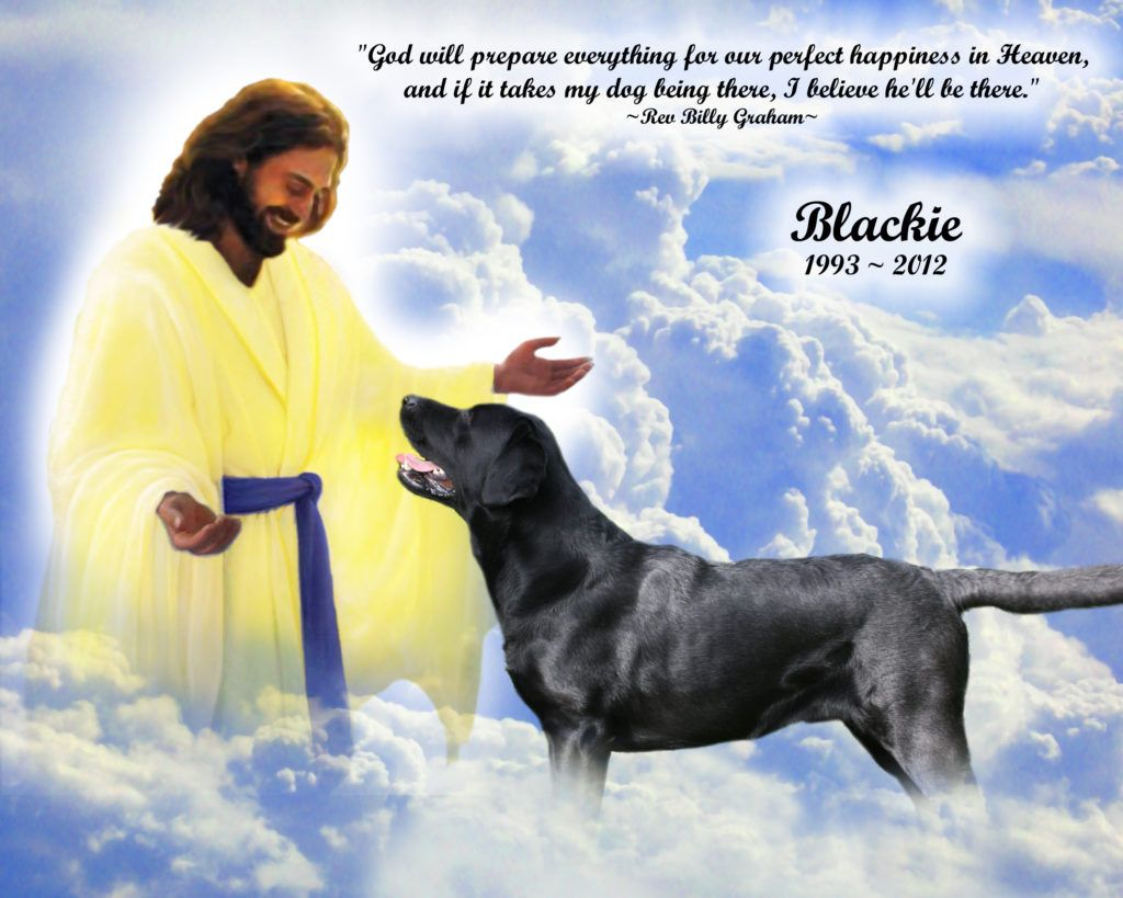 Do Dogs Go To Heaven Dog Memorial Labrador Retriever Dog