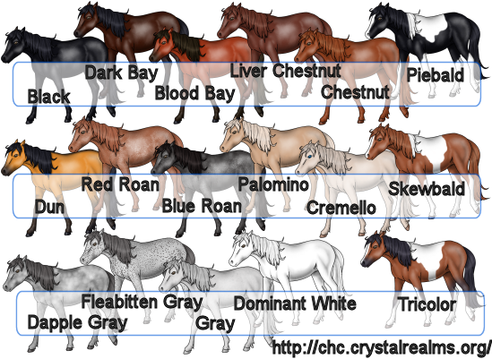 Horse color and markings chart any is acceptable as also colors hobit fullring rh