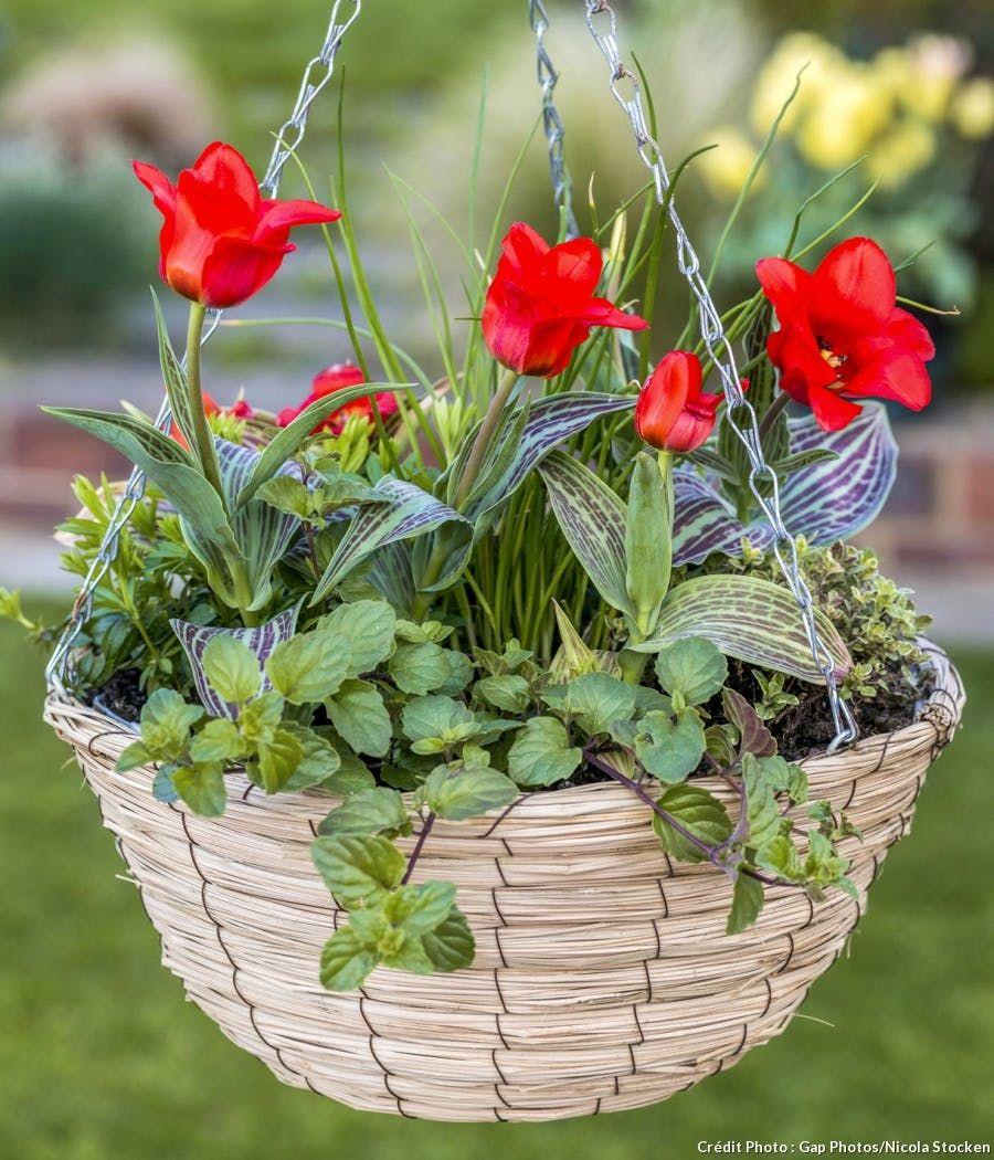 Comment faire une suspension de fleurs ? | Fleurs, Planter des fleurs et Suspension fleurs