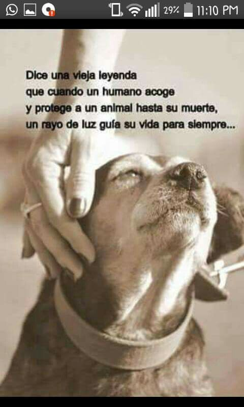 Que Asi Sea Doggie S Pinterest Perros Perros Frases And Amor