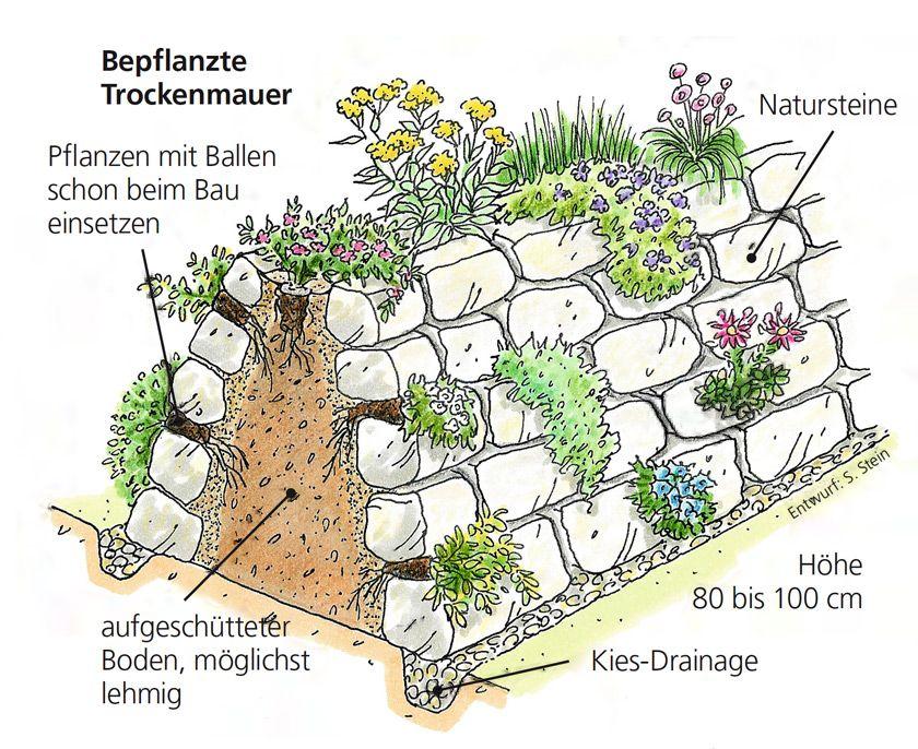 bepflanzte trockenmauer muro info baluga pinterest g rten trockenmauer und kr uter. Black Bedroom Furniture Sets. Home Design Ideas