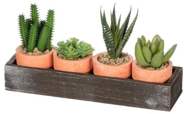 Gracie Oaks 4 Piece Cactus Desktop Plant In Tray Set Decoration