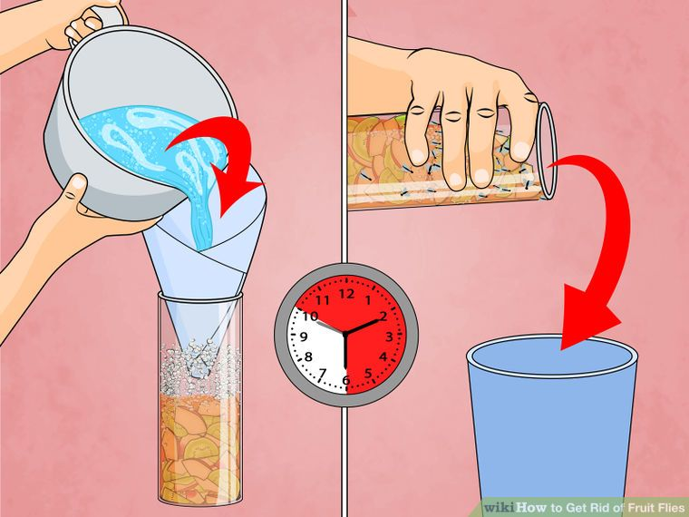 Get rid of fruit flies fruit flies fruit household