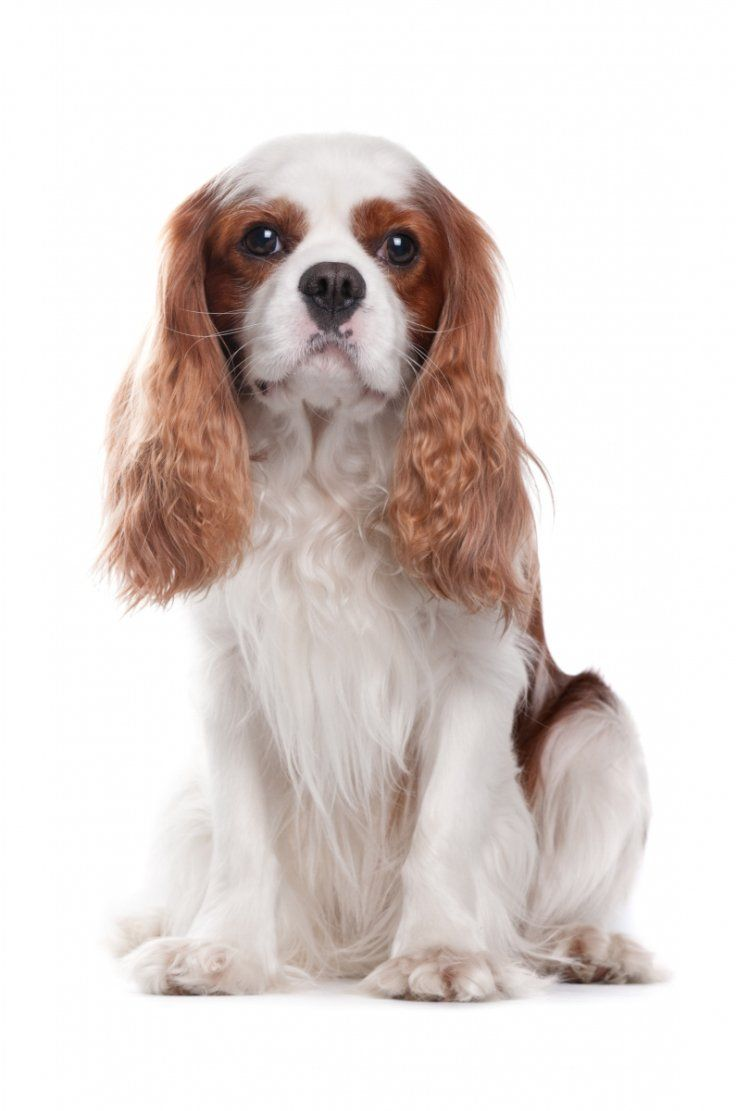 Top 10 LowMaintenance Dog Breeds Perfect for Busy Owners