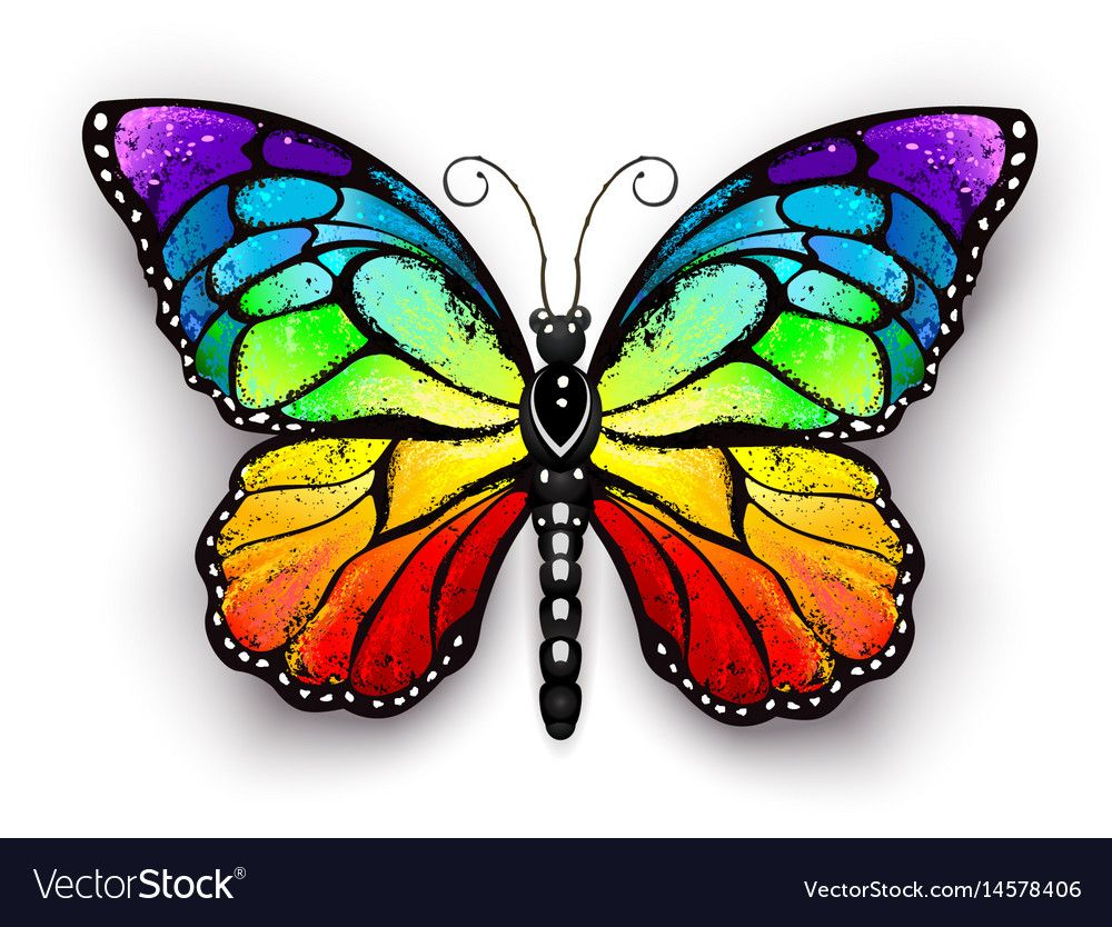 Rainbow Monarch Butterfly Royalty Free Vector Image Butterfly Drawing Butterfly Art Butterfly Canvas